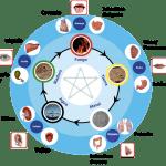 Las emociones y acupuntura